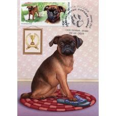 2019 Декоративные породы собак. Пти-брабансон № 2019-073-4