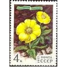 1977 Цветы Гор Сибири, Новосиверсия ледниковая