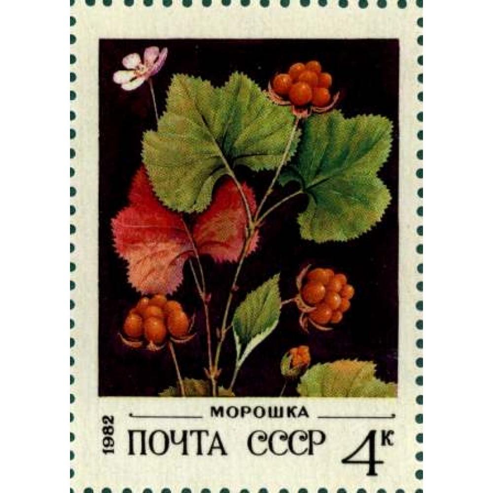 1982 Дикорастущие ягоды