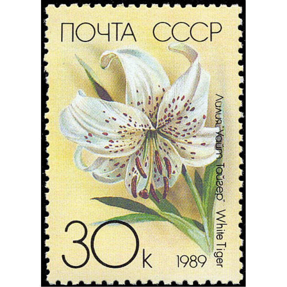 1989 Садовые лилии.Белый тигр