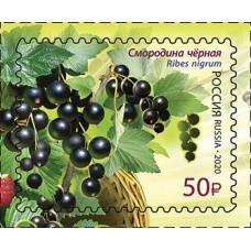 2020 Флора России. Ягоды № 2586