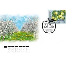 2019 Флора России. Сорта яблони № 2067-2