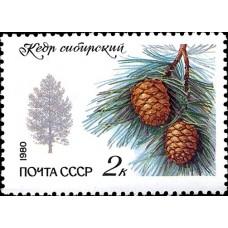 1980 Охраняемые породы деревьев и кустарников.Кедр сибирский