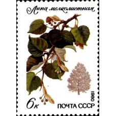 1980 Охраняемые породы деревьев и кустарников.Липа мелколистная